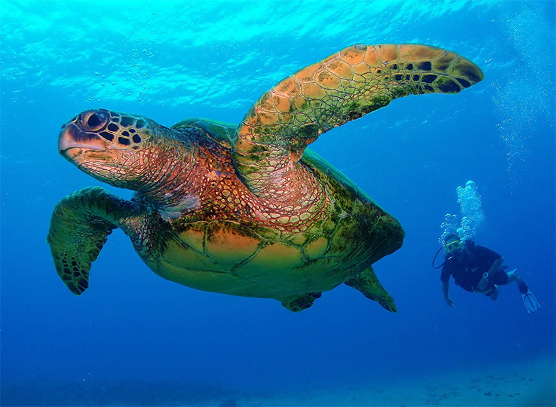 Dive with a turtle